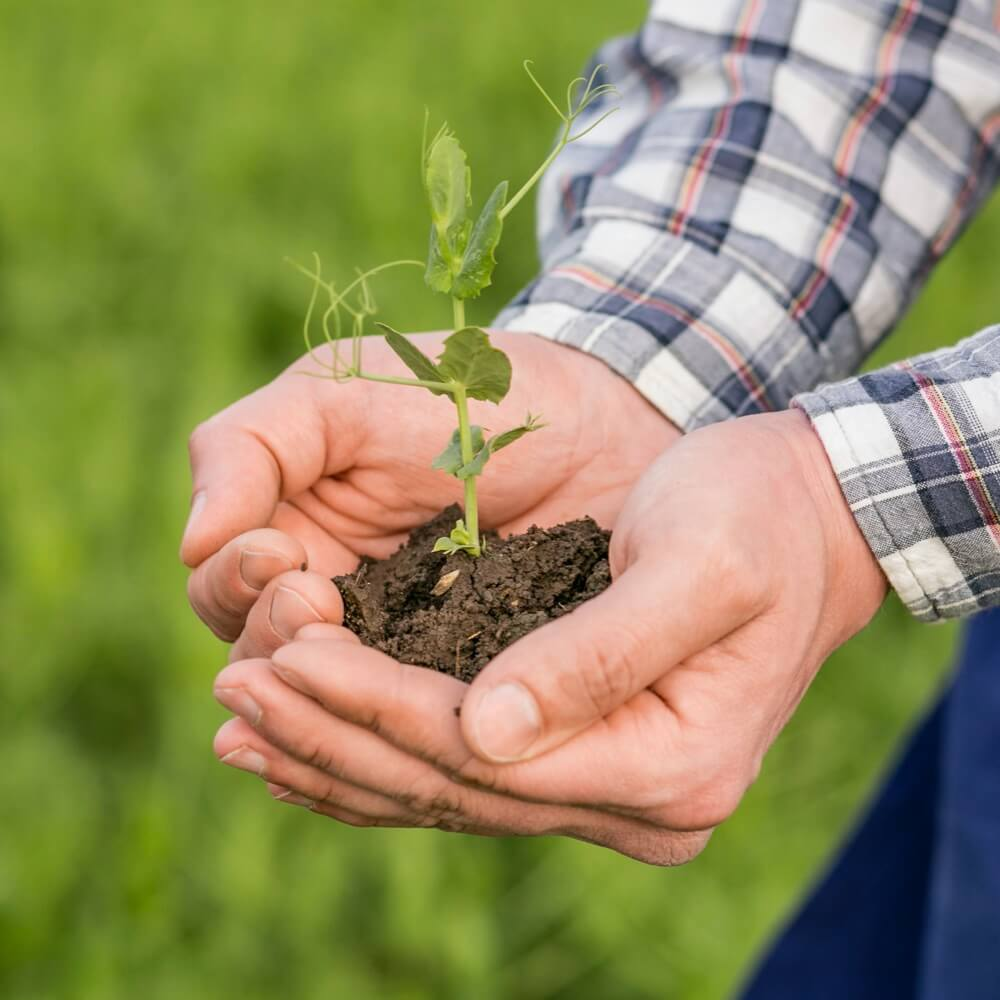 producteur de légumes bio tient une jeune pousse