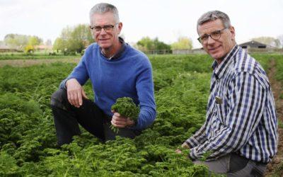 Les Flandres, terroir de rêve pour les herbes aromatiques